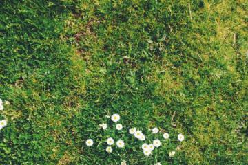 Lawns & Stones